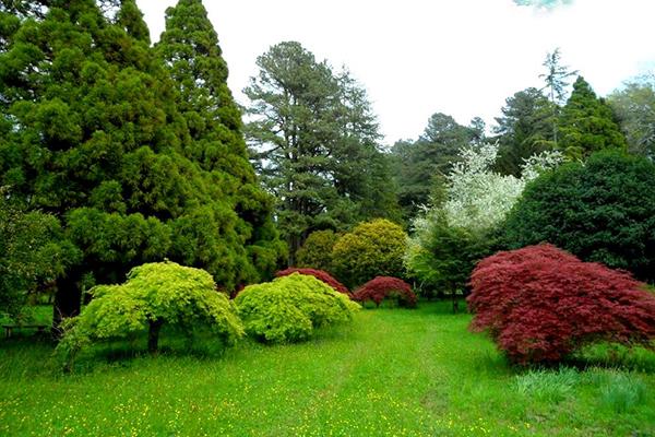 Ботанический сад в Батуми